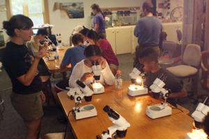 plankton investigation at the SERC