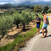 farm's olive trees
